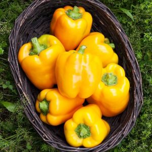 Pepper, Golden California Wonder